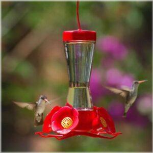 Nectar Feeders