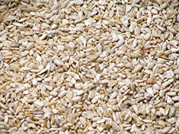 Closeup of medium sunflower hearts