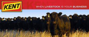 Kent Livestock