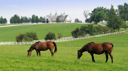 Photo of 2 horses grazing in the pastures with a white fence and a nice house in the background
