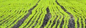 ag fertilizer