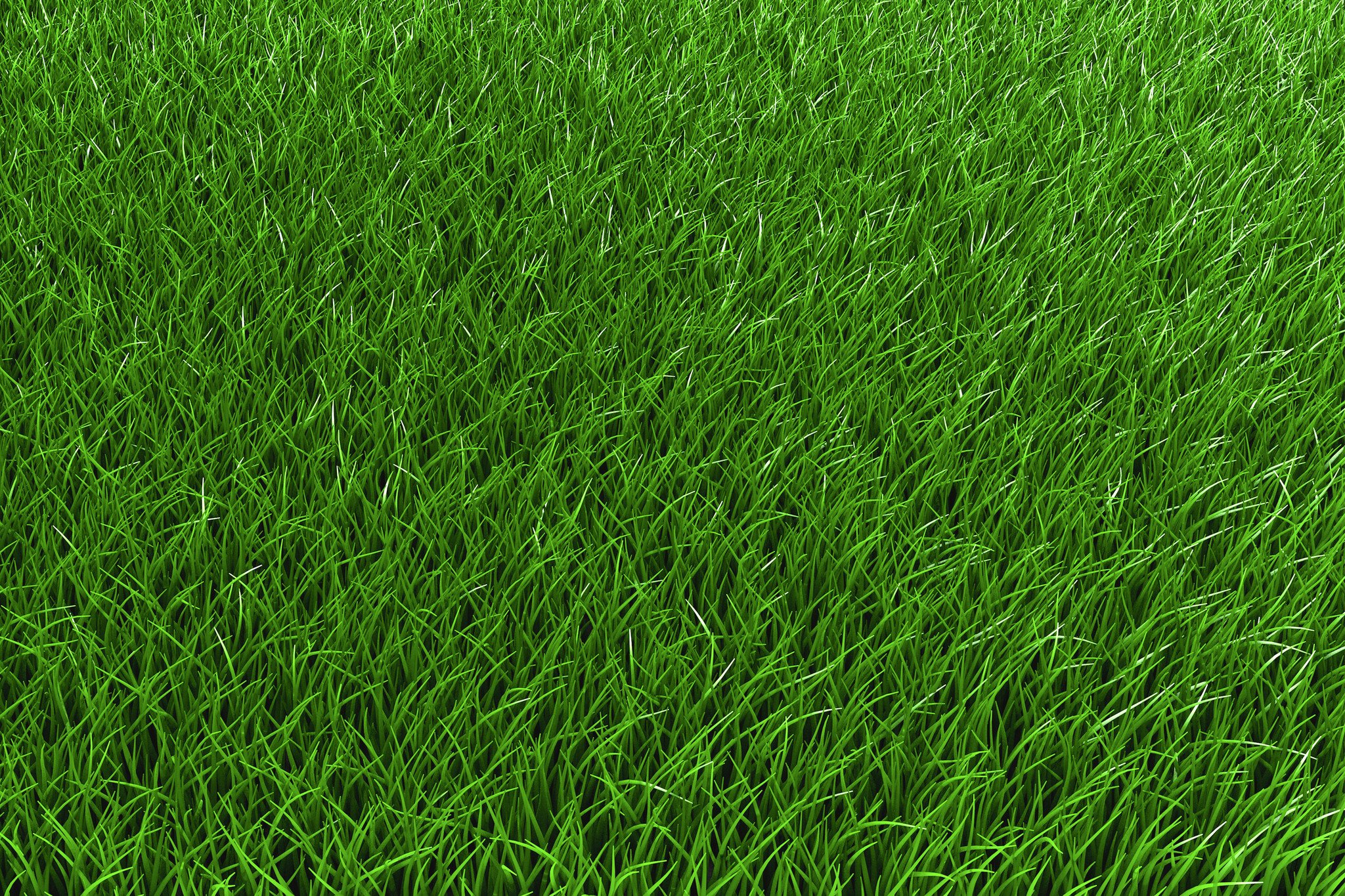 Best Lawn Fertilizer >> Creeping Red Fescue - Hendricks Feed & Seed Co., Inc