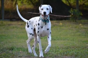 Dog Food and Pet Food in Iowa
